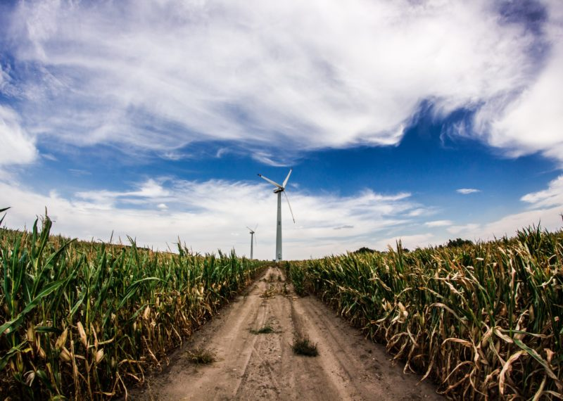 Windmill in corn seed