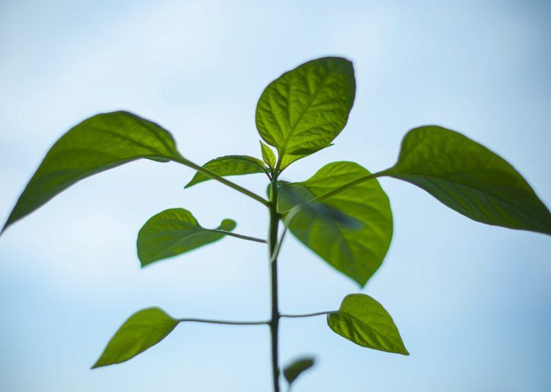leaf with light blue background