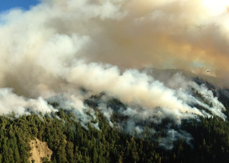 A wildfire rages through a California forest