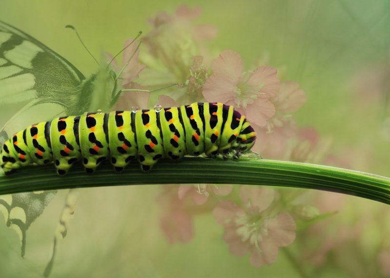 Caterpillar on stem