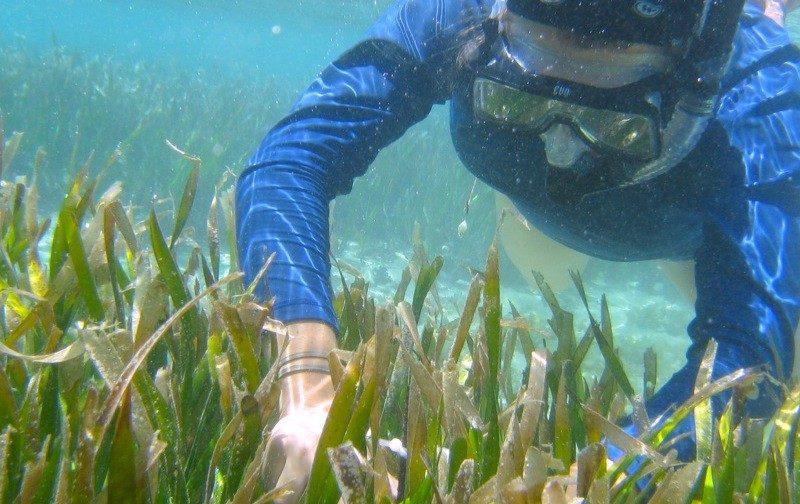a diver explores coral feefs in Guam, blue suit