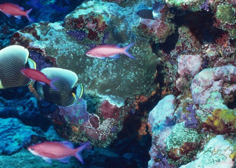 different fish swimming around corals