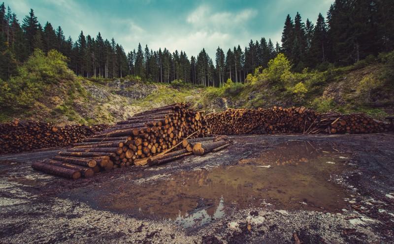 Fighting Climate Crisis Nexus Media News