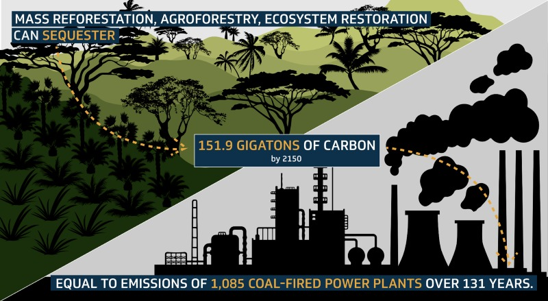Preserving and expanding forests soak up carbon pollution