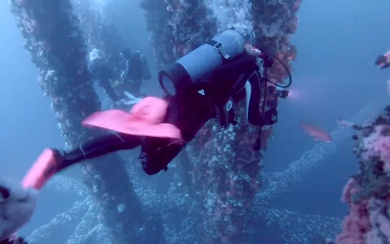 A diver explores sea life on offshore oil rigs
