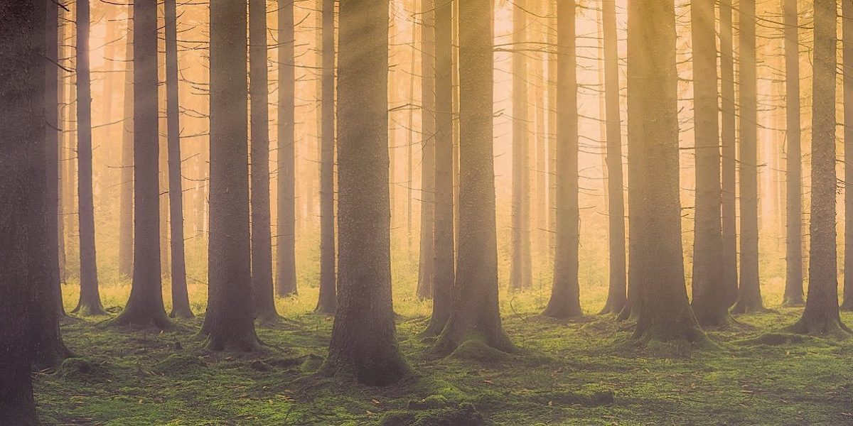 trees with light rays in the background