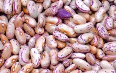 pile of white Beans