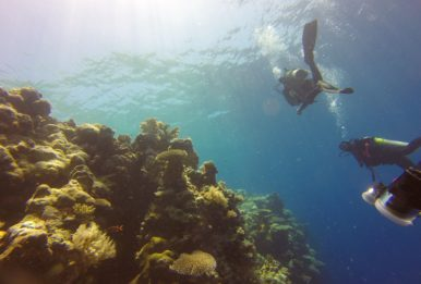 divers trying to rise to the reef surface