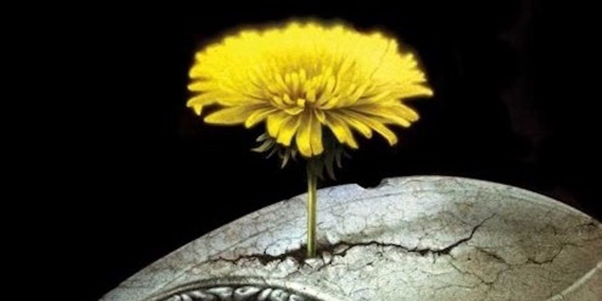 yellow flower on concret, black background