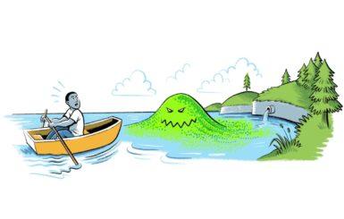 toxic algae klamath river