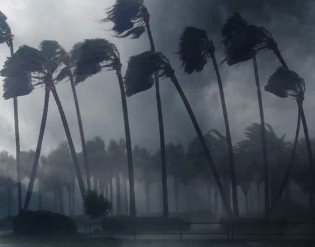 palm trees blowing with the hurricane wind