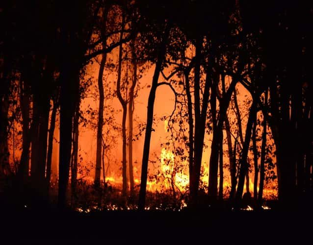 wildfire coming through the trees