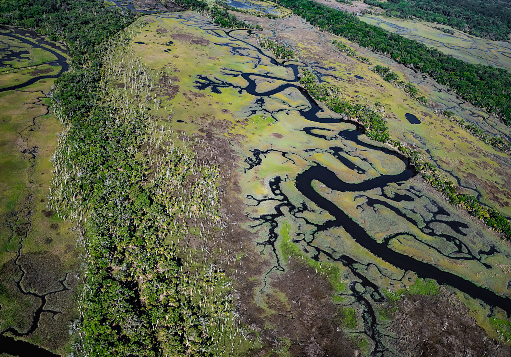Ossabaw Island is an uninhabited barrier island made up of marshes, creeks and forests. Trees at lower elevations are dying because saltwater is seeping into the soil as sea levels rise. Credit: Teake Zuidema for Nexus Media News