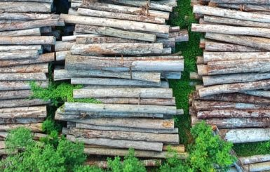 Wood piles. Source: Pexels