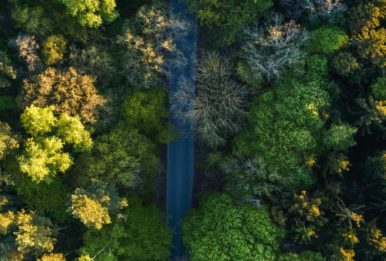 A forest, as captured by a drone. Source:Pexels