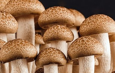 Mushrooms. Source:Pixabay