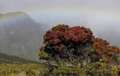 Maui, Hawaii. Source:Pixabay