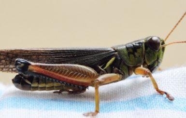 A cricket. Source:Pexels