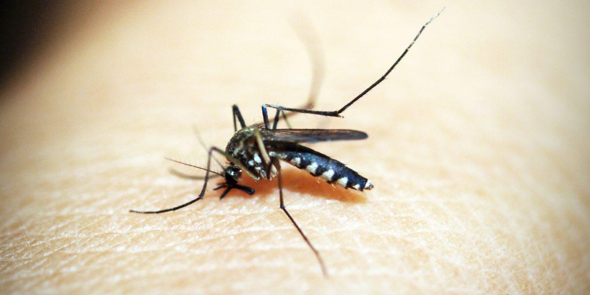 Climate Change Mosquitos Nexus Media News