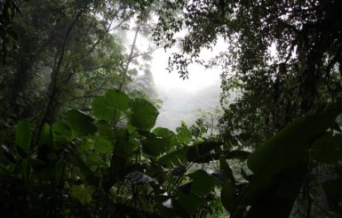 Tropical Forests Nexus Media News