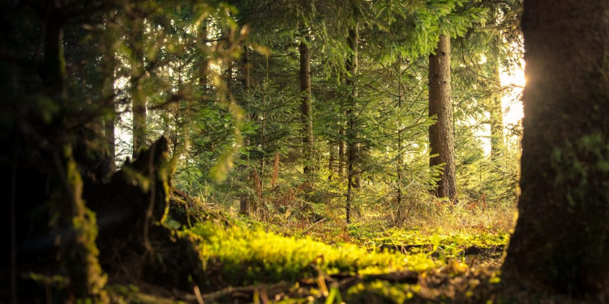 A forest. Source: Pexels
