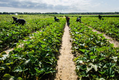 Migrant farm workers in field