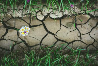 parched soil and plants