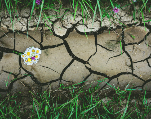 parched soil and plants